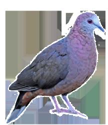 Damn dove
