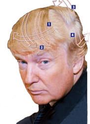 Trump hair style1