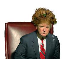 trump-hair1a